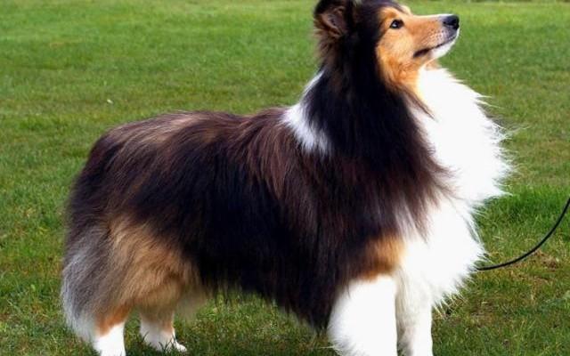 La mode canine