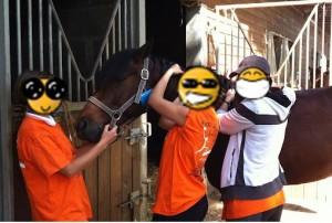 Pionter un cheval