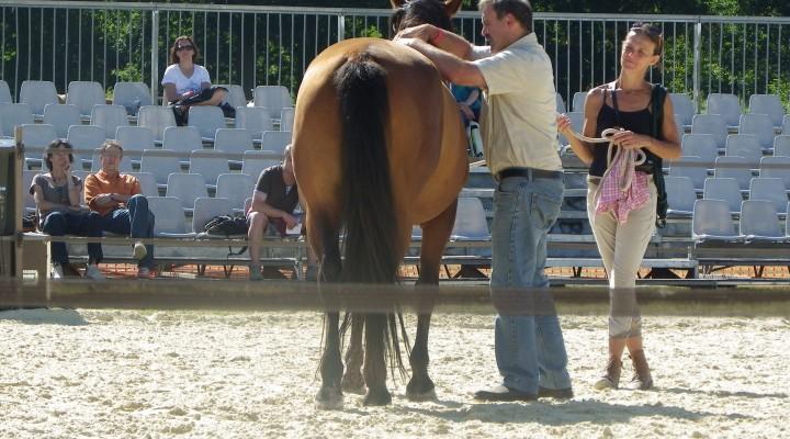Le shiatsu chez les chevaux