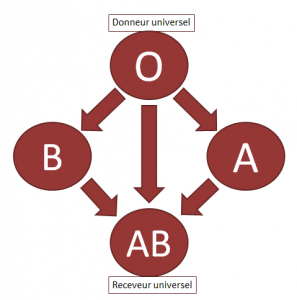 Compatibilité système ABO