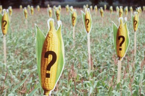 OGM ou non