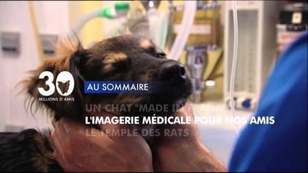 L'émission animalière de France 3