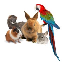 Les nouveaux animaux de compagnie