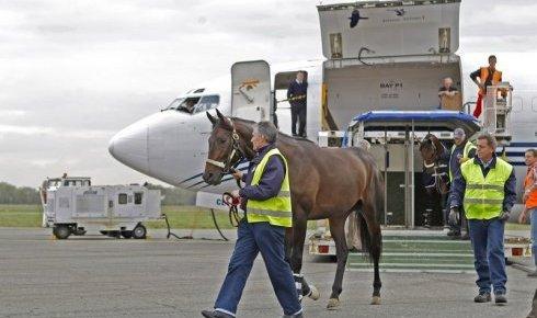 Les chevaux et l'avion