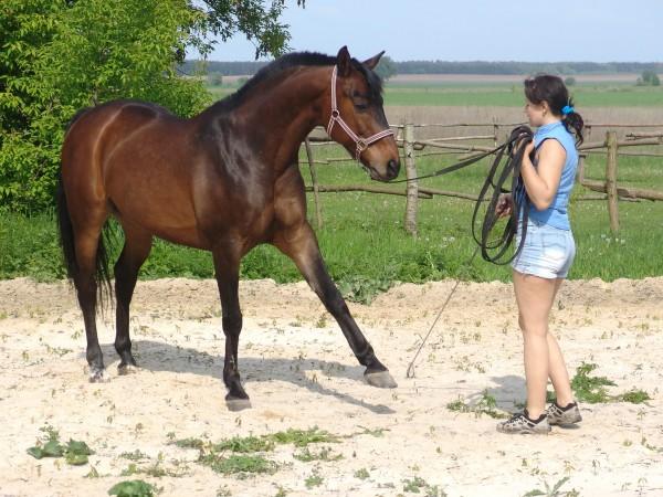 Travail jeune cheval