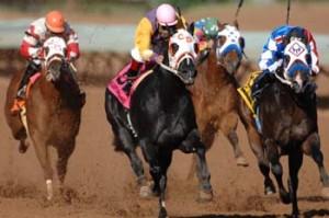 Clones de Quater Horse aux courses ?