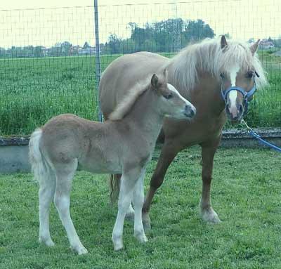 Prometea est le premier cheval cloné et a eu un poulain, Pegaso
