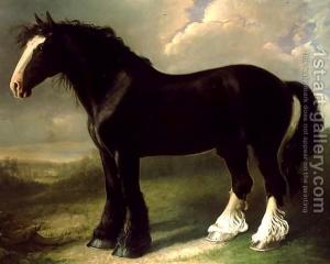 Ancêtre du cheval Shire