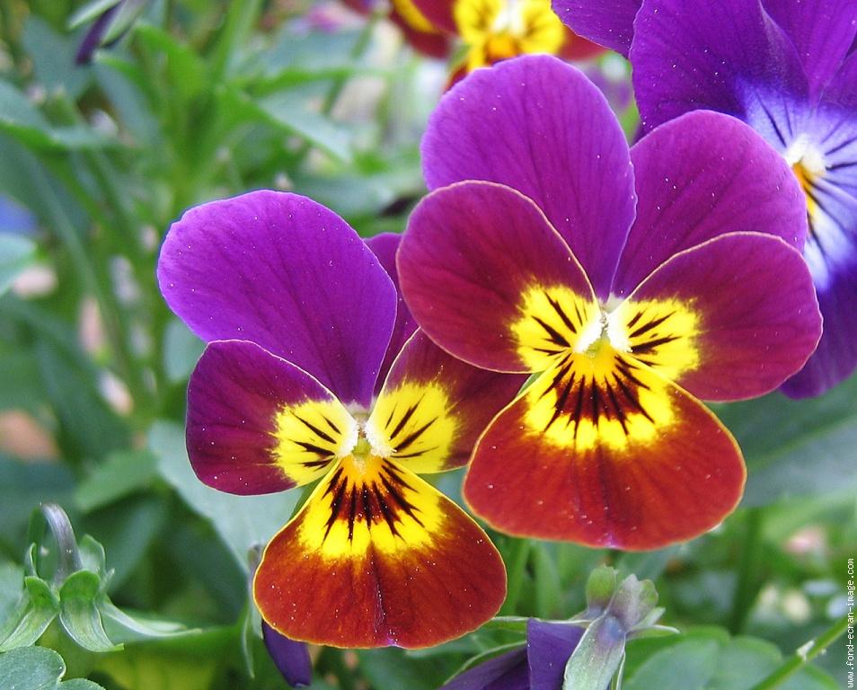 Les fleurs et arbustes qui poussent en hiver magazine for Les fleur