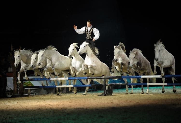 Lorenzo à la Nuit du Cheval