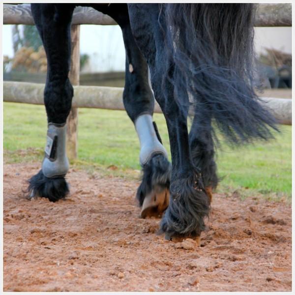 Eviter la gale de boue du cheval