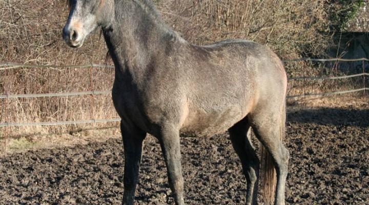 Gale de boue du cheval