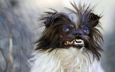 Peanut, deux ans, nommé chien le plus moche