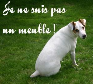 Statut juridique animaux : de bien meuble à être doué de sensibilité