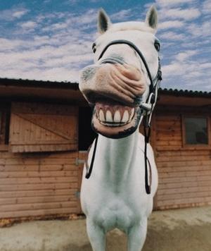l'hygiène bucco-dentaire chez le cheval