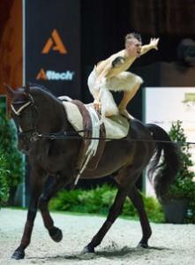 Race cheval Selle Français Poivre Vert