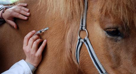 Vacciner son cheval