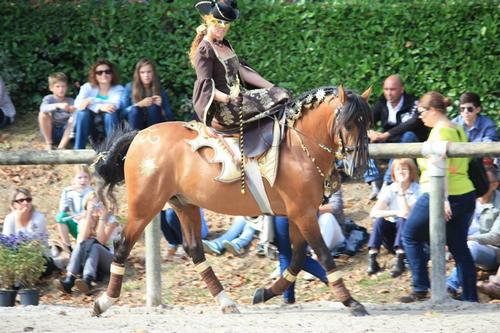 Cheval portant l'une des création d'Aurélie