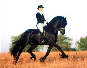 Race cheval frison