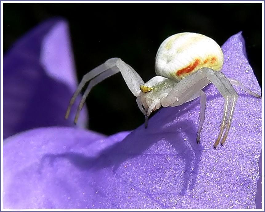 Les araignées : ces héroïnes qui nous font peur