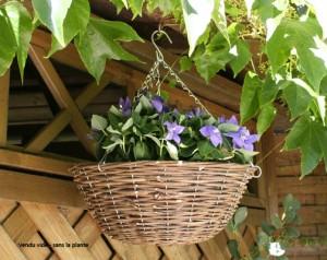 Choisir des pots suspendus pour son jardin et pour réaménager sa cour