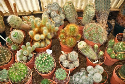 Les plantes succulentes et les cactus