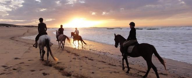 Conseils pour une balade à cheval réussie
