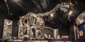 squelettes de dinosaure