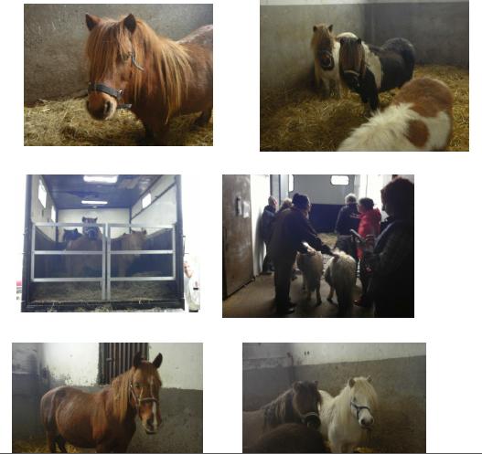 sauvetage chevaux spa de la creuse