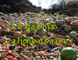 Le g chis alimentaire magazine cheval monchval mag for Cuisine 0 gachis