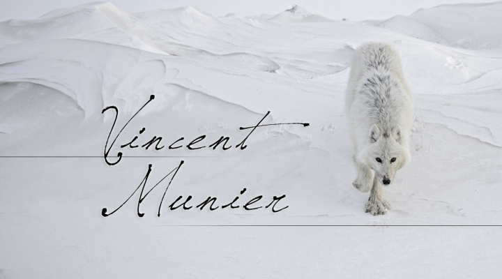 La nature sauvage à travers les photographies de Vincent Munier