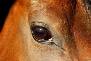 La vue du cheval
