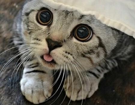 Les 9 meilleures compilations de chats qui se ridiculisent devant la caméra