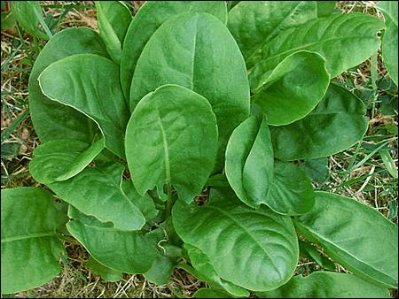 Les plantes aromatiques magazine cheval monchval mag for Plantes aromatiques