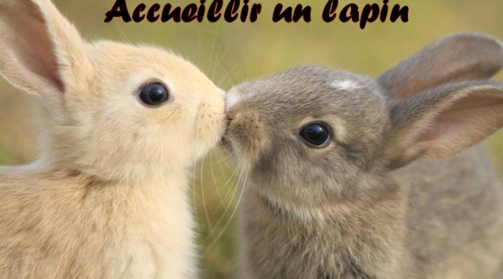 Accueillir un lapin