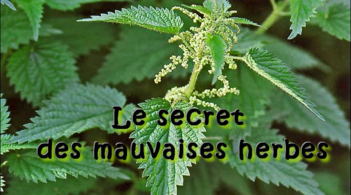 Les secrets des mauvaises herbes