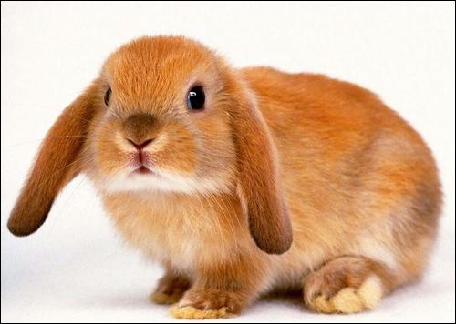 les soins du lapin