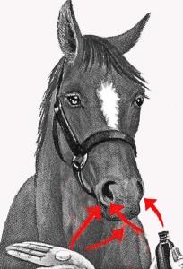 le cheval est sensible aux odeurs