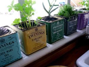 boite à thé recyclées en herbier