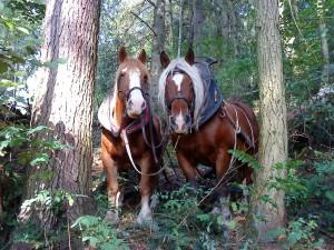 chevaux en tandem