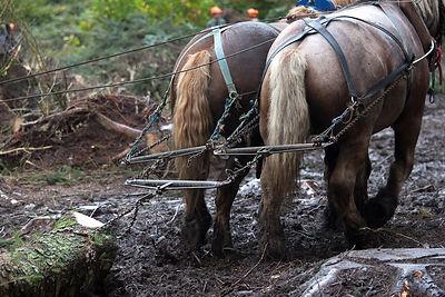 Le débardage à l'aide de chevaux