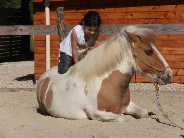 équithérapie cheval