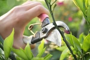 tailler les arbres et plantes grimpantes