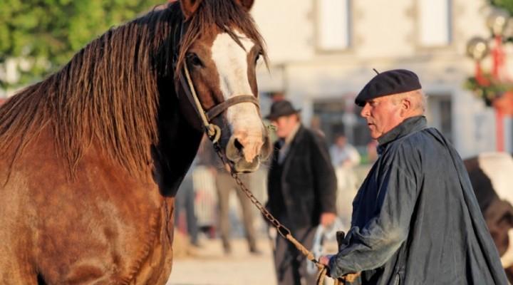Le cheval Breton