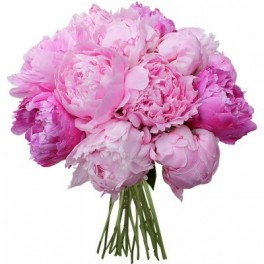 Les fleurs offrir en fonction des occasions magazine for Offrir des roses