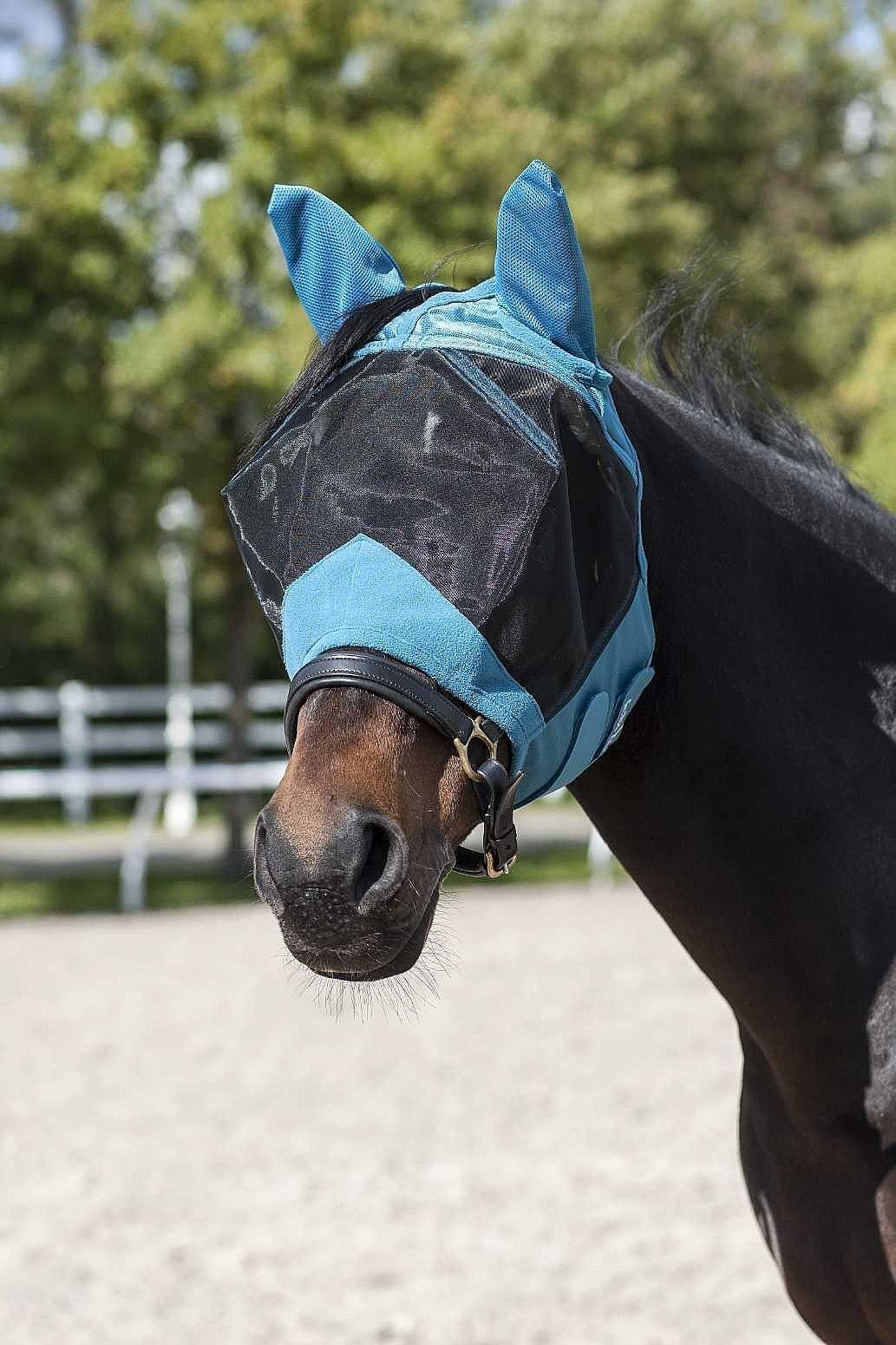 Protéger son cheval contre les insectes
