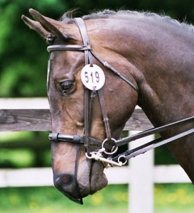 protection cheval contre les insectes