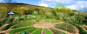 Exemple de jardin permaculture