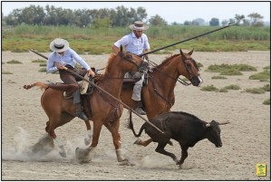 35 e féria du cheval Méjanes