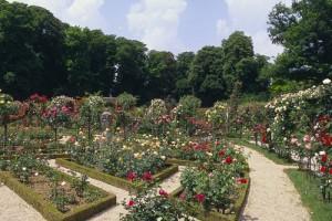 La roseraie du Val de Marne avec des fleurs